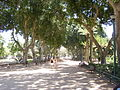 PikiWiki Israel 8312 meir garden tel- aviv.jpg