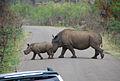 Pilanesberg Game Reserve - Mama Rhino and Her Baby.jpg