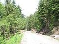 Piles of harvested logs alongside forestry road - geograph.org.uk - 468851.jpg