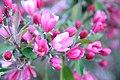 Pink (509399845).jpg