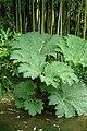 Plante à très larges feuilles.jpg