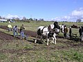 Ploughing, old style - geograph.org.uk - 1224962.jpg