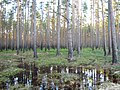 Pludi 2011 - panoramio (3).jpg