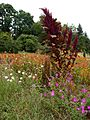 Poltava Botanical Garden (163).jpg