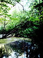 Pond in Comana Forest, Giurgiu.jpg