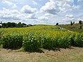 Pope Farm Conservancy - panoramio - Corey Coyle (12).jpg