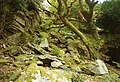 Portmeirion, rocky landscape - geograph.org.uk - 38868.jpg