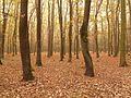 Prag Kunratický les Laub 201610.jpg