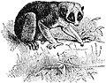 Primates22.jpg