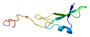 Structure of the NRG1 protein. Based on PyMOL ...