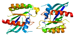 Protein RRAD PDB 2dpx.png