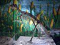 Psittacosaurus mongoliensis skeleton.JPG