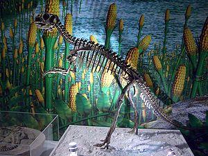 Ceratopsia - An early ceratopsian: Psittacosaurus