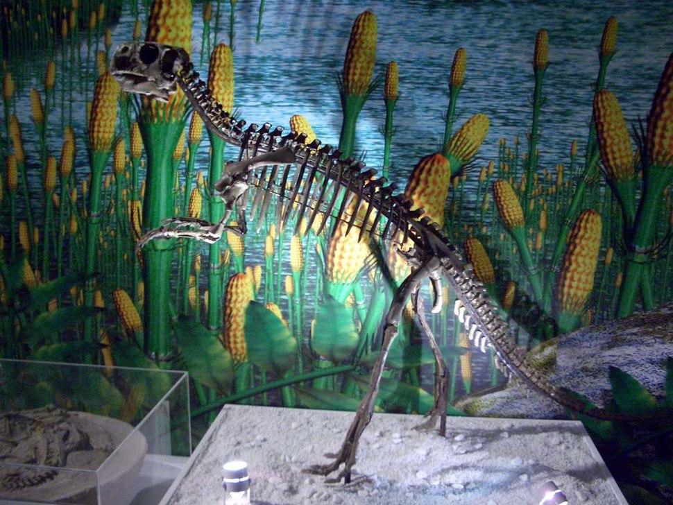 Psittacosaurus mongoliensis skeleton