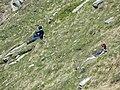 Punta Fetita, Valle d'Aosta (44833292655).jpg