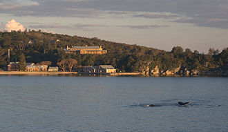North Head Quarantine Station - The hospital, boiler house and wharf at the Quarantine Station, with humpback whales passing by.