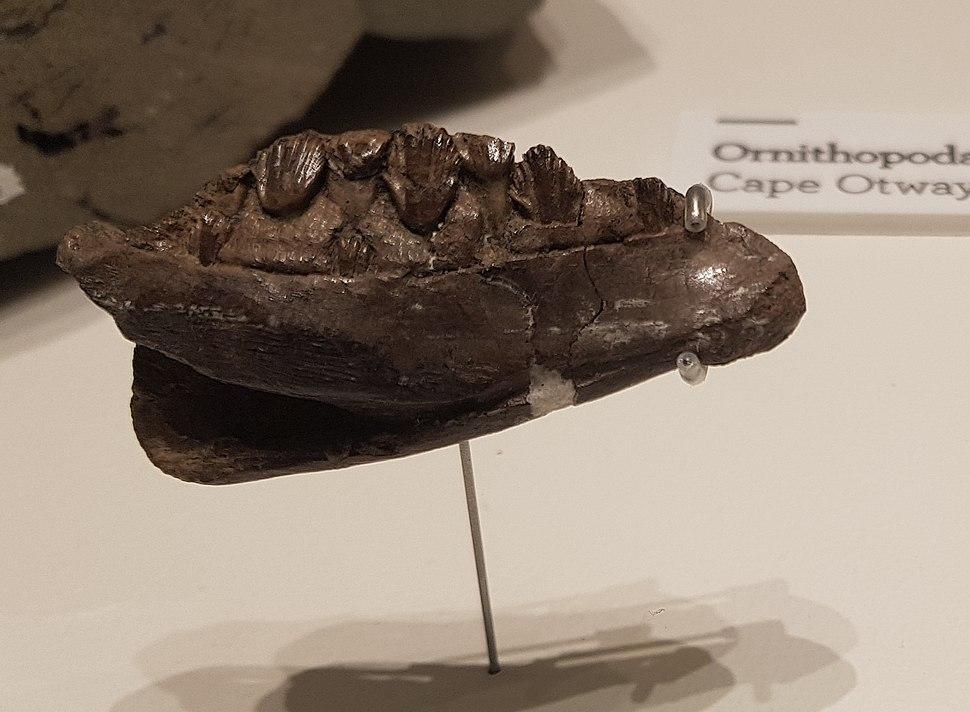 Qantassaurus intrepidus jaw