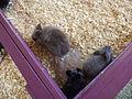 Rabbits at Wild Adventures.JPG