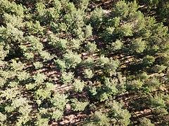 Raka skuggor i skogen.jpg