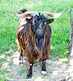 Ramnicu Valcea - zoo 11.jpg
