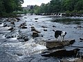 Rapids below Barnard Castle - geograph.org.uk - 1195363.jpg