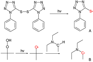 Reactivity–selectivity principle - Sulfur tetrazole radical derived from photolysis of disulfide and carbon radical derived from photolysis of t-butyl peroxide followed by proton abstraction from triethylamine