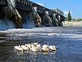 Red River Dam (38578263704).jpg