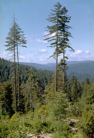 Hyperion (tree) - Example of redwoods in Redwood National and State Parks (Hyperion not pictured)