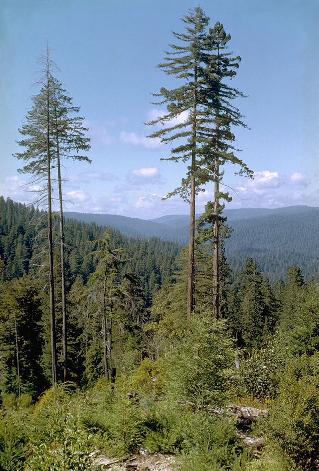 http://upload.wikimedia.org/wikipedia/commons/thumb/7/7e/Redwood_National_Park_REDW9343.jpg/640px-Redwood_National_Park_REDW9343.jpg
