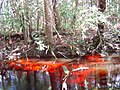 Reserva ecológica Lajes - panoramio (4).jpg
