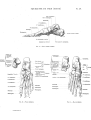 Richer - Anatomie artistique, 2 p. 36.png
