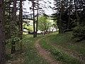 Riebeis forest.jpg