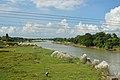 River Damodar - Amta - Howrah 2013-09-22 3131.JPG