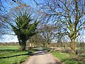 Road To Birdsall - geograph.org.uk - 389578.jpg