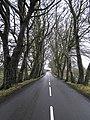 Road near Galgorm - geograph.org.uk - 647440.jpg