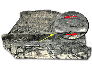 Pseudotachylite - Pseudotachylite from the Rochechouart impact structure