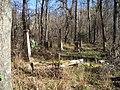 Rodney Cemetery Revisited - Rodney, Mississippi (343236233).jpg