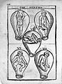 "Roesslin ""Birth of mankind"", 1604; foetuses Wellcome L0016745.jpg"