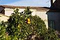 Roquebrun-9594 - Flickr - Ragnhild & Neil Crawford.jpg