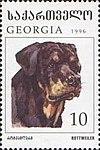 Rottweiler-Canis-lupus-familiaris.jpg