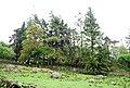 Rough grazing and woodland near Muncaster Head - geograph.org.uk - 1337230.jpg