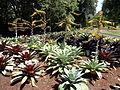Royal Botanic Gardens Sydney 06.JPG