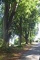 Sázava, Na Rokličkách, stromy.jpg