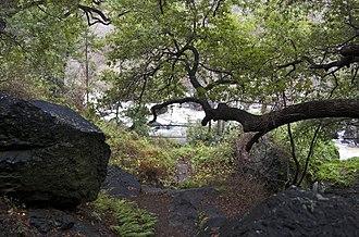 Silver Peak Wilderness - Salmon Creek, on the trail to Salmon Creek Falls