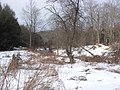Salt Springs State Park (3284693128).jpg
