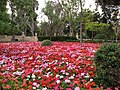 San Anton Attard Gardens 06.jpg