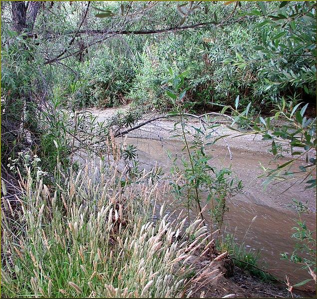 File:San Timoteo Creek 5-19-13a (9017442255).jpg