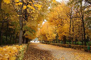 Schönbrunn Gardens in autumn