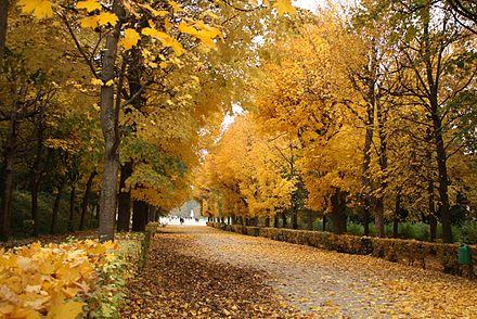 The Schonbrunn gardens in autumn Schonbrunn Gardens in autumn.JPG