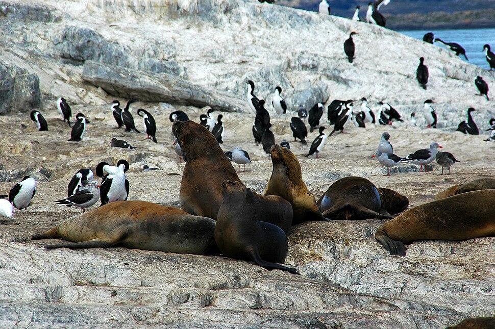 Seeloewen beagle 3